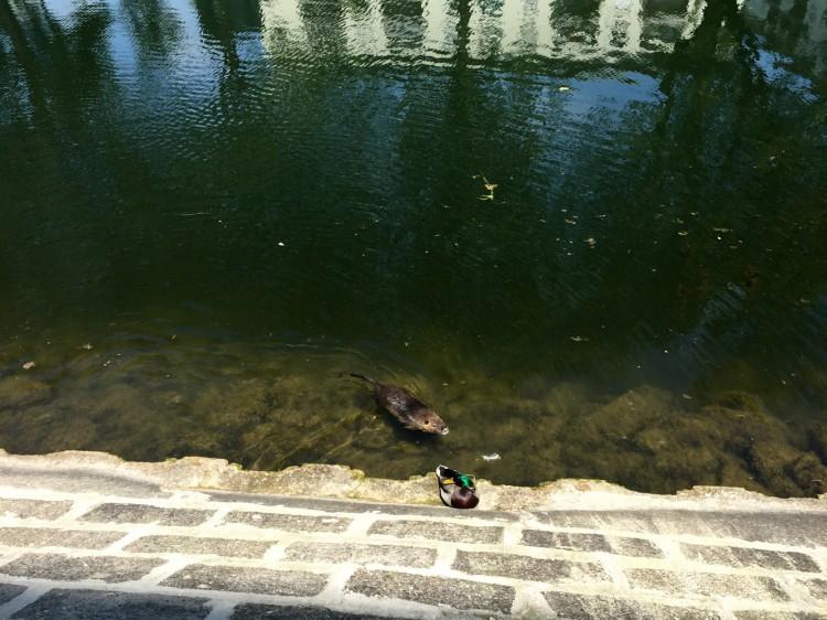 Strasbourg: bassin Dusuzeau